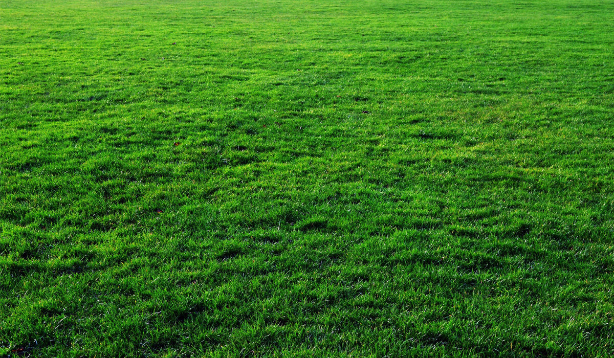 Thick Free Grass Texture Or Green Lawn Background Photo